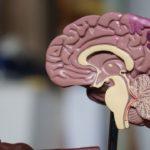 rehabilitacion-cognitiva-en-ancianos